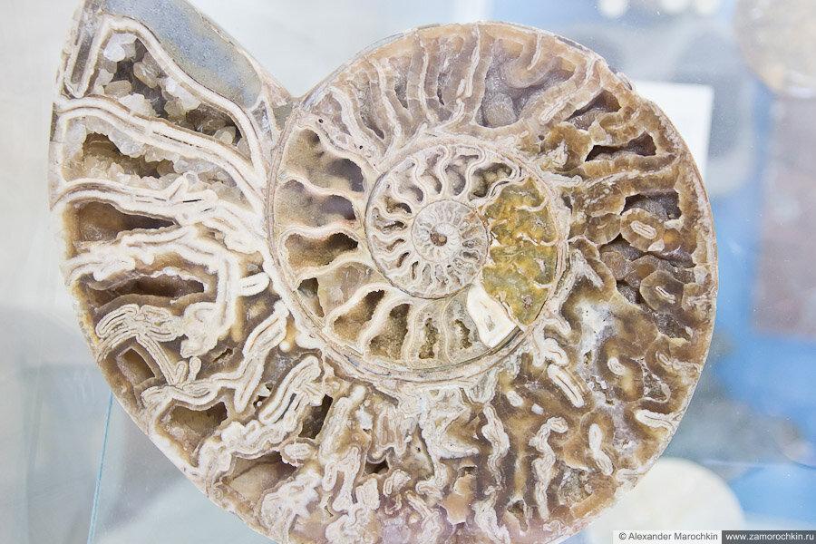 Окаменелый моллюск в музее ракушек Корфу