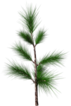 Holliewood_SpringFaeries_Branch9.png