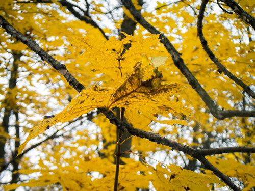 Опаленные осенью