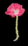 Palvinka_FlowerEssence_flower3.png