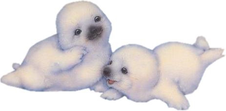 PNG (255).png