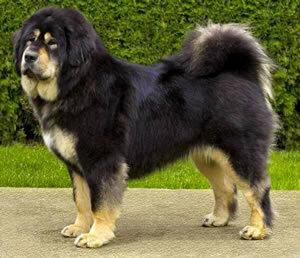 Красивые и добрые собаки 0_bbfb6_7ff6cdcc_M