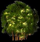 R11 - Palms - 2013 - 3 - 034.png