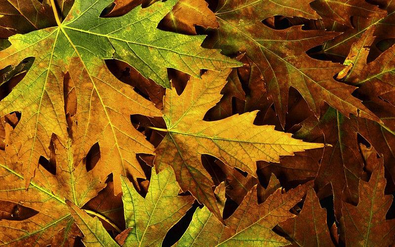 Осень Падают Листья Вверх Вниз Кружит Их Ветер