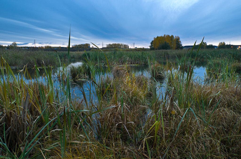 Фото 1. Утренний пейзаж на озере Лебяжье. Все заросло камышами и нет возможности подойти к кромке воды. Снято на широкоугольный объектив Samyang 14/2.8 и фотоаппарат Nikon D5100