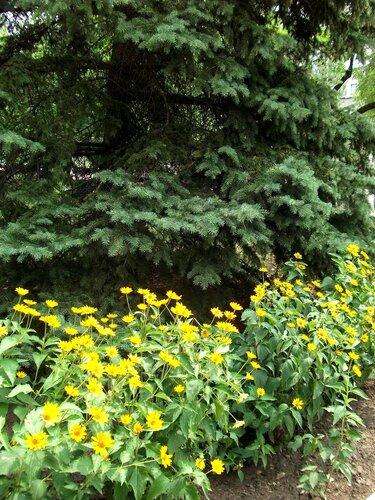 Цветы и елка