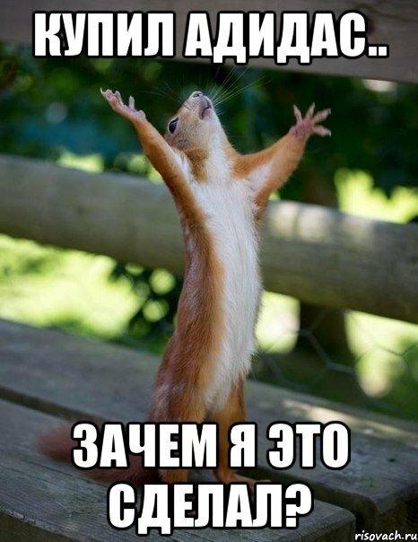 belka_42049247_orig_.jpg