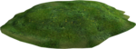 Holliewood_SpringFaeries_Grass7.png