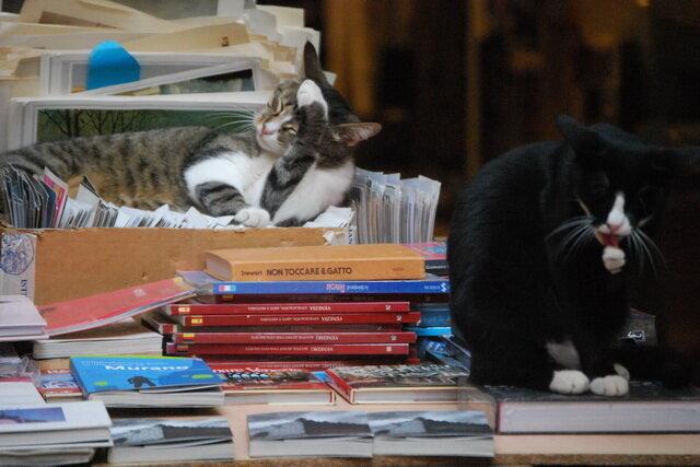 Книжный магазин Libreria Acqua Alta. Венеция