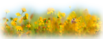 aclis_flowers_02_23_06_2012.png