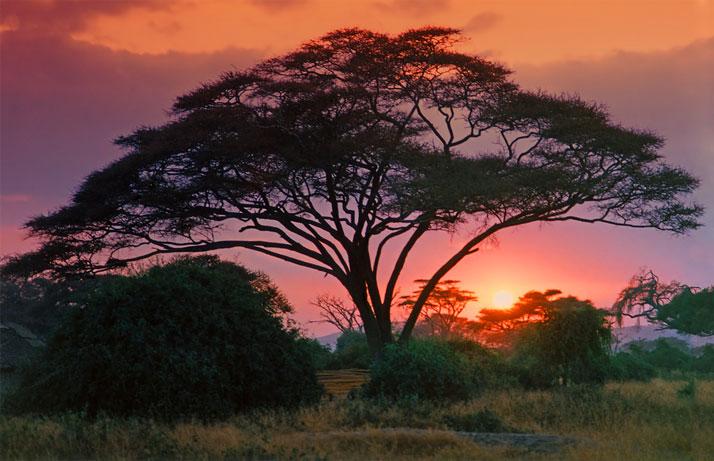 Гедабекском районе серое дерево африки википедия салюте Дворцовой площади
