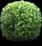 shrub_png_by_dbszabo1-d368txl.png