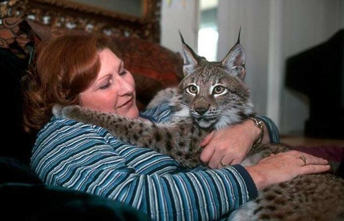 Животные и люди. Необычные домашние любимцы