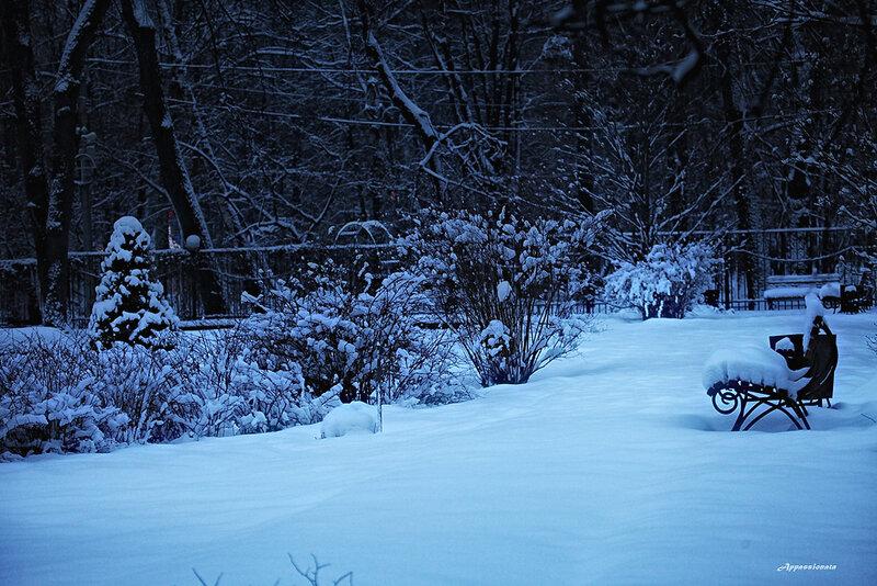 Зима в Сокольниках