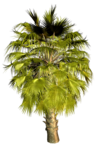 Palms  (38).png