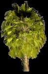 Palms  (38).png