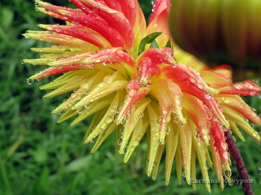 Цветы до слез фото