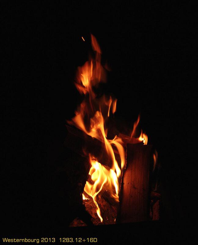 1283.12+16D Саламандра с деревяшкой
