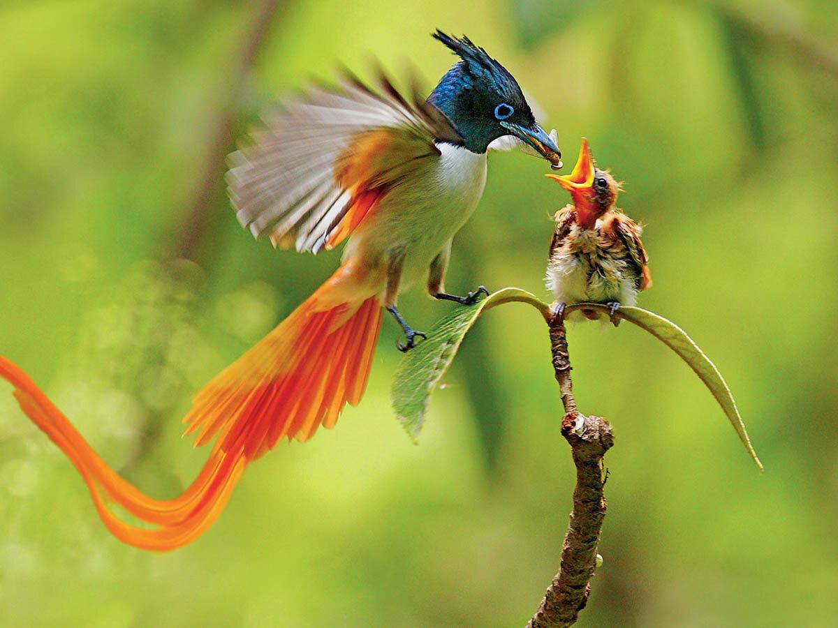 птица смайлик:
