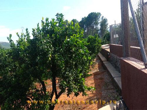 Вилла в Gandia, вилла в Гандии, недвижимость в Гандии, вилла в Испании, особняк в Испании, большая площадь земли, недвижимость в Испании, CostablancaVIP