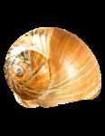 Detailed shot of seashell on sand.