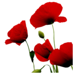 flowers_20_bycrealine.png