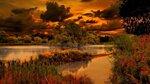 Gold nature (41).jpg
