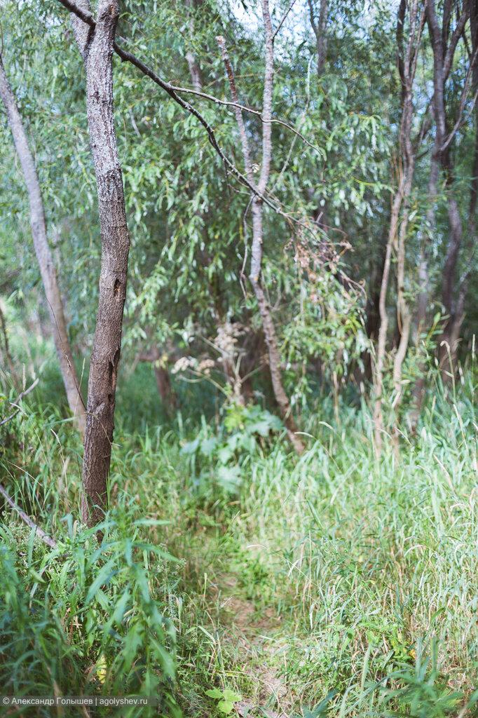 Вятские джунгли