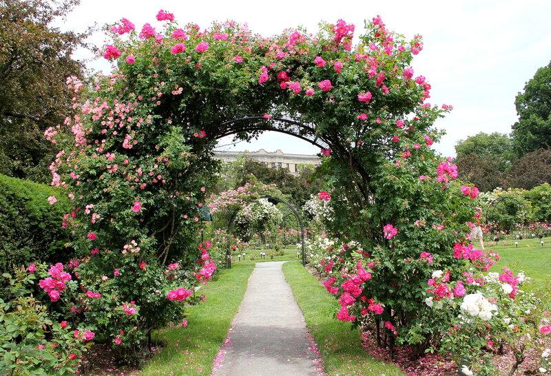 Ворота из роз.