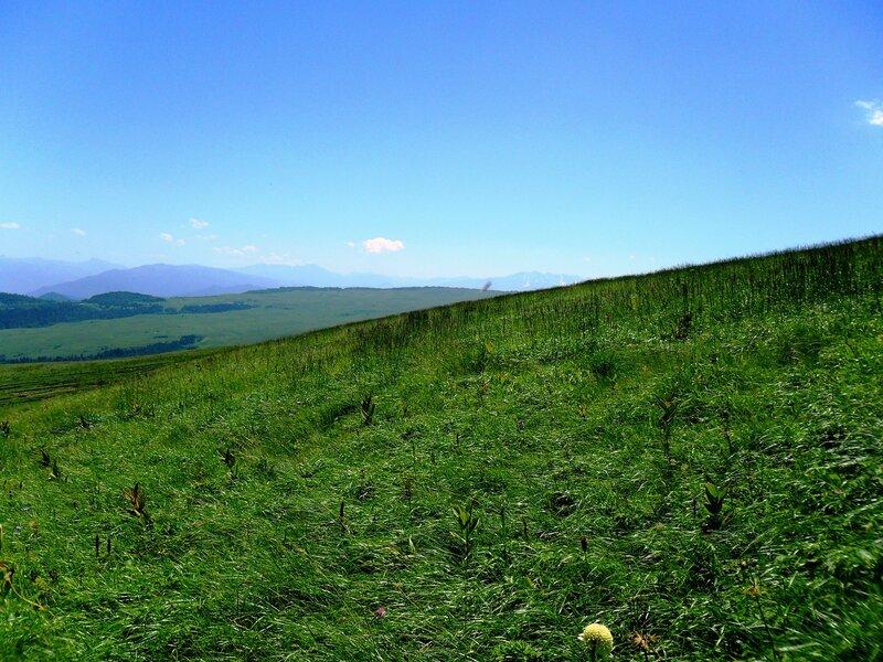 На плато, даль и травы ... SAM_0872.JPG