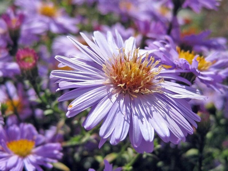 Предосенний цветочек