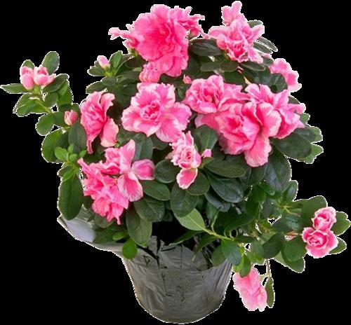 Растения в цветочных горшках
