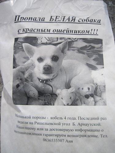 объявление, пропала собака