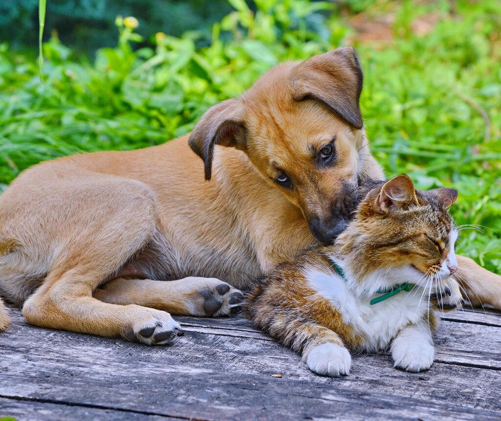 Картинки дружба между собакой и кошкой