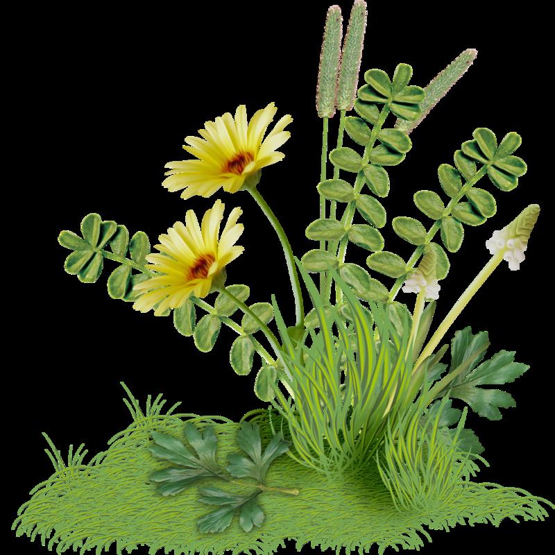 Гифка трава растет на прозрачном фоне
