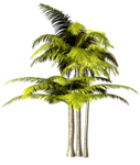 Palms  (34).png