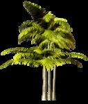 Palms  (34).png
