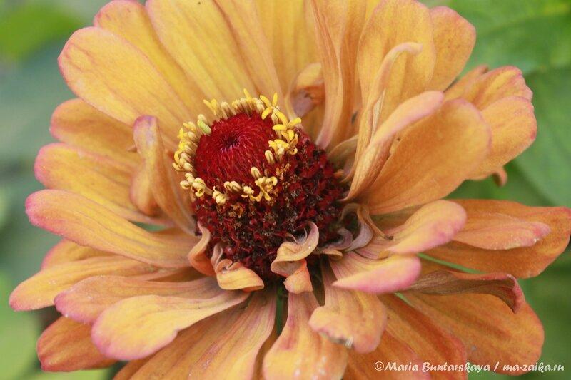 Цветы, Саратов, 07 августа 2013 года