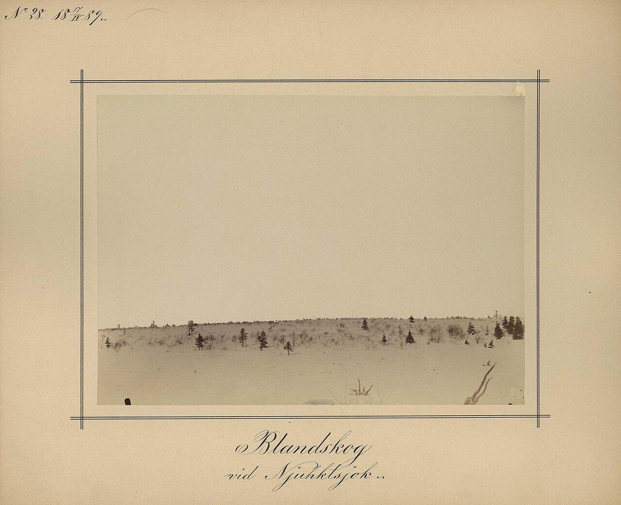 17.4.1889. Смешанный лес возле реки Njukhts
