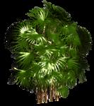 R11 - Palms - 2013 - 3 - 035.png