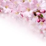 Pink (3).jpg