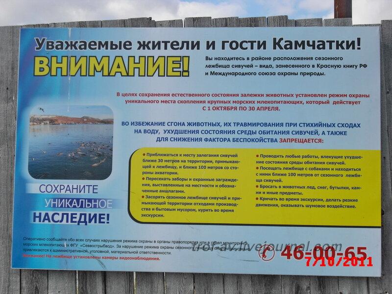 Лежбище сивучей на старом пирсе, Петропавловск-Камчатский