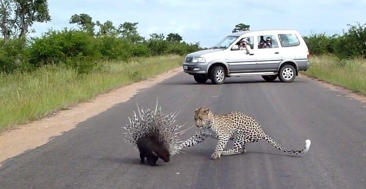 Встреча с дикими животными в Африке