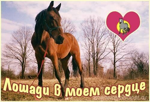 лошади - слабость  Светланы Канаевой