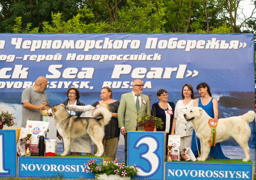 http://img-fotki.yandex.ru/get/9542/1773011.37/0_a897d_be8aec39_L.jpg