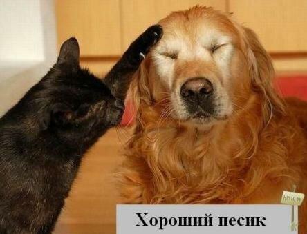 Такие разные животные