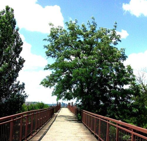 Дерево у моста