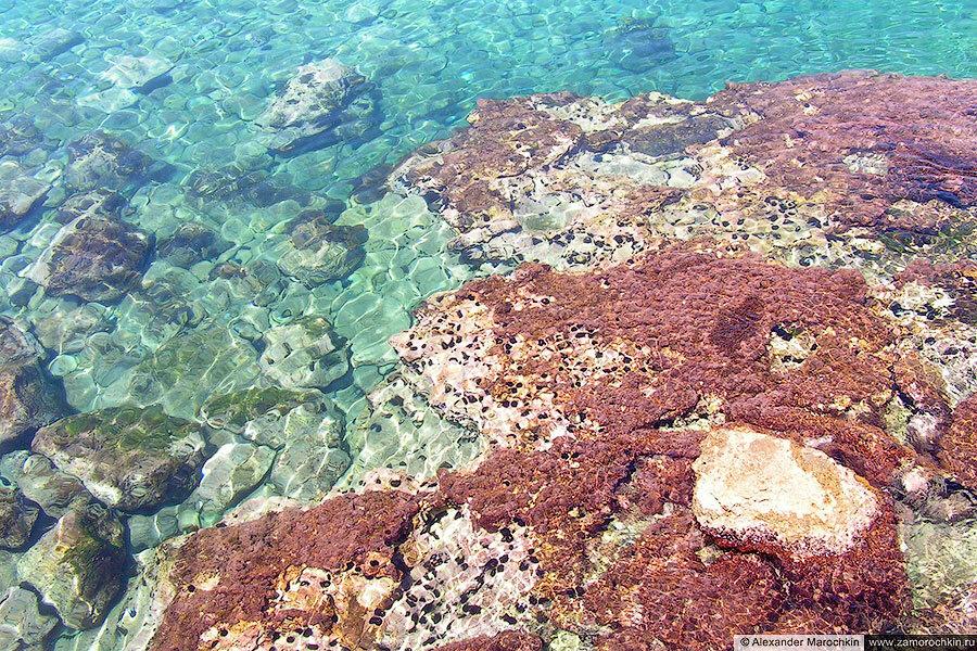 Море, камни, морские ежи (Ретимно, Крит)