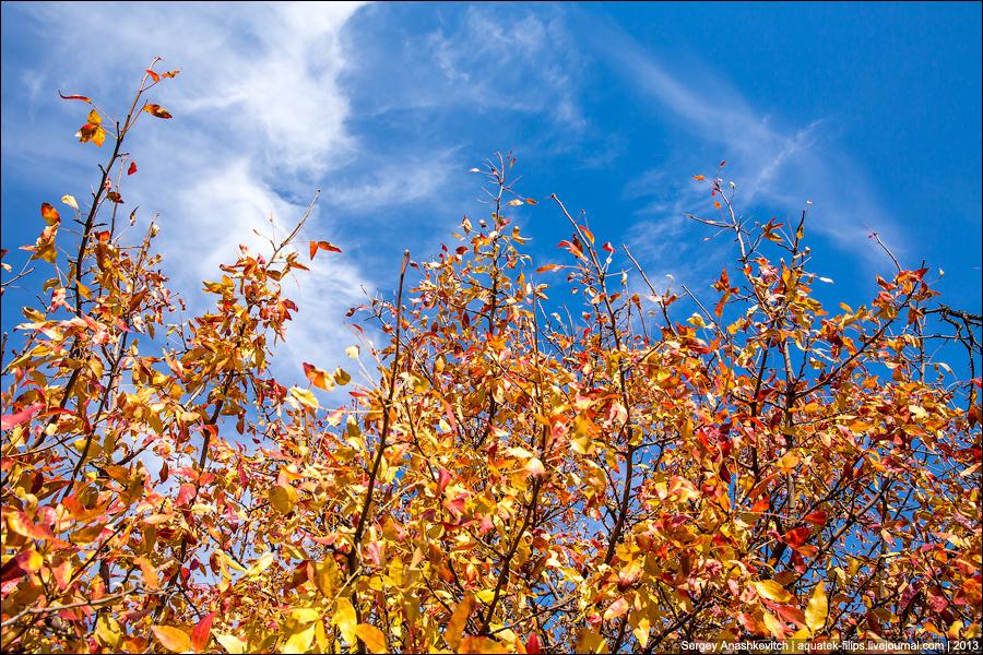 Осенние краски в Севастополе