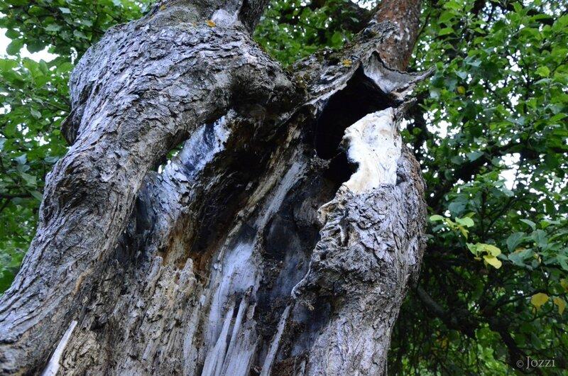 портрет дерева